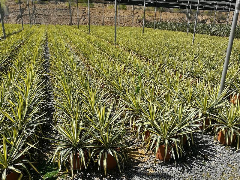 Plantación 2